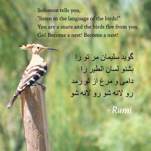 "Solomon tells you, ""Listen to the language of the birds"" from Hilat Raha Kon – Rumi"